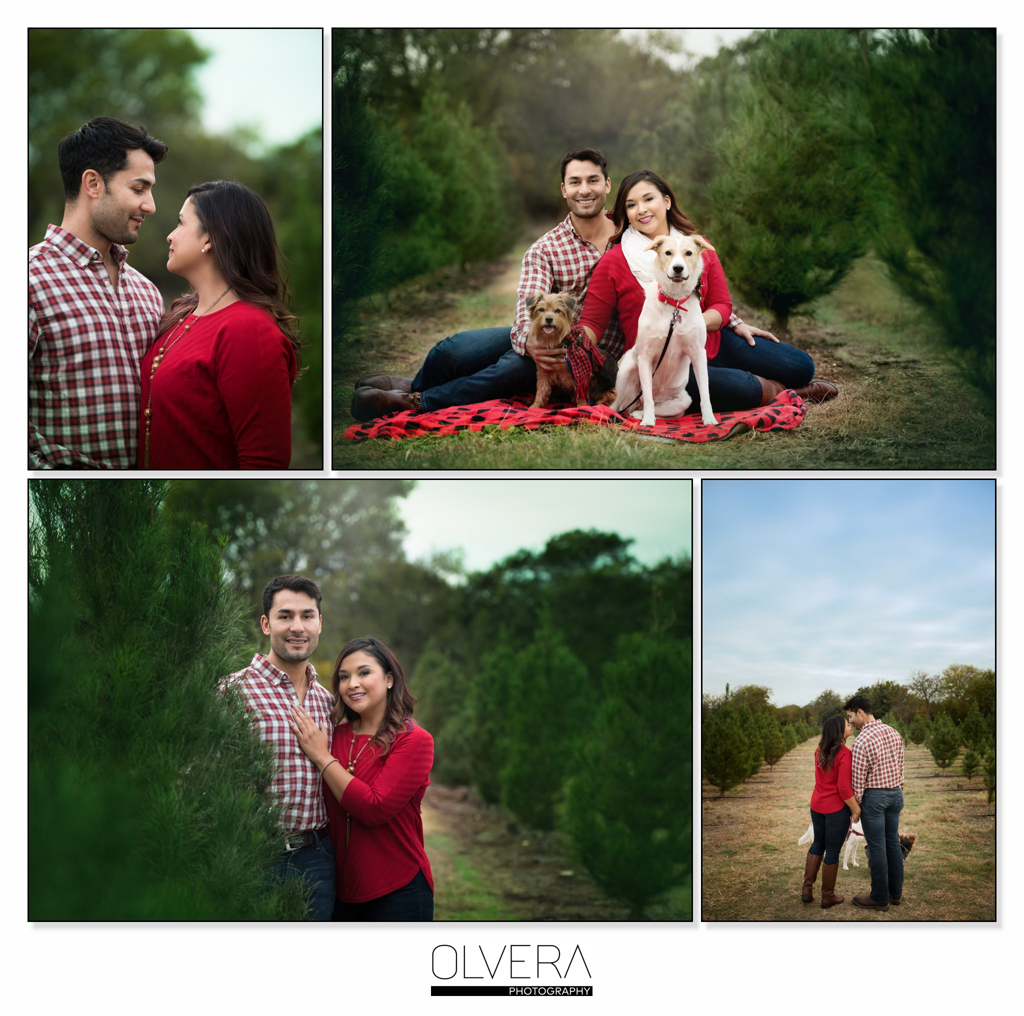 Christmas Tree San Antonio: Couples Portraits At Christmas Tree Farm
